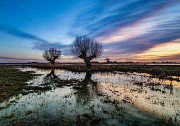 Knotwilgen in een weiland tijdens de zonsondergang van Michel Knikker
