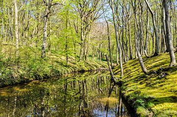 Le printemps sur la haute banque près de Lietzow sur GH Foto & Artdesign