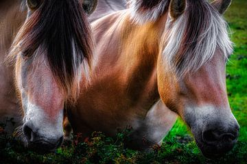Pferde von Jan Bakker