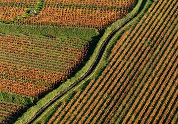 Boomgaard in herfstkleur  van Sky Pictures Fotografie
