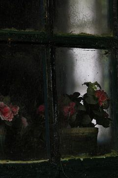 Het oude raam met de oude bloemen