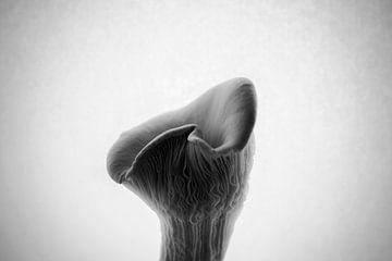 Austernpilz in Schwarz-Weiß | Vintage Feel von ellenklikt