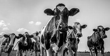 Kühe in einem Feld während des Sommers in Schwarzweiss von Sjoerd van der Wal
