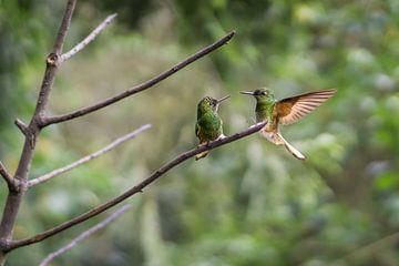 Zwei grüne Kolibris berühren sich fast gegenseitig die Schnäbel, High-Shutter-Bild..... von Twan Bankers