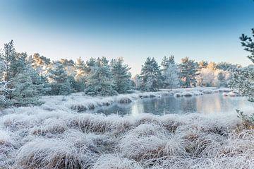 winterlandschap van eric brouwer