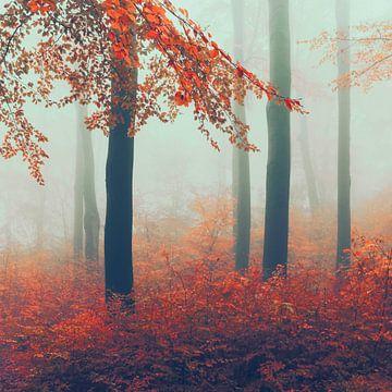 November bos in mist