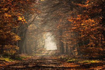 forest colour sur Tonny Eenkhoorn- Klijnstra
