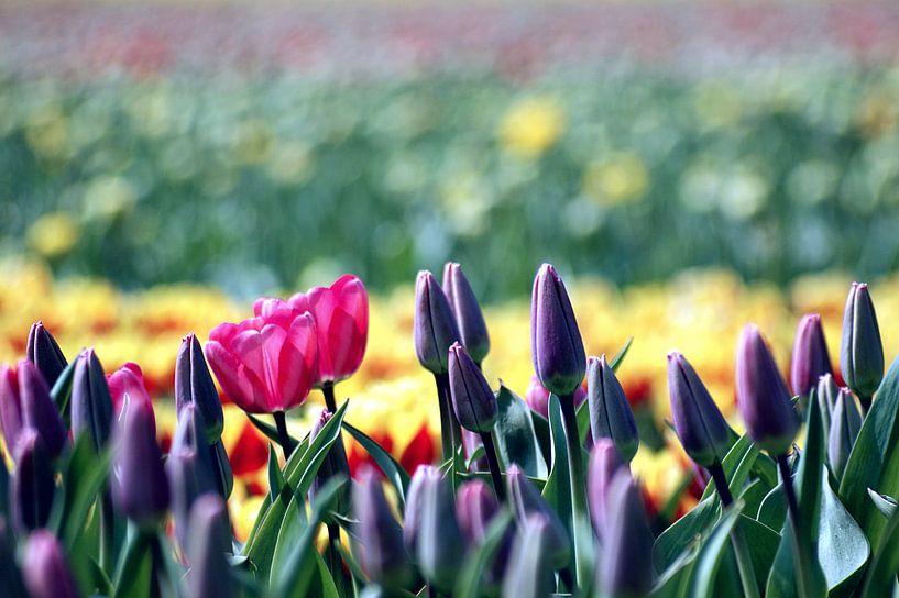 The Colors of Dutch Spring van Remy De Milde