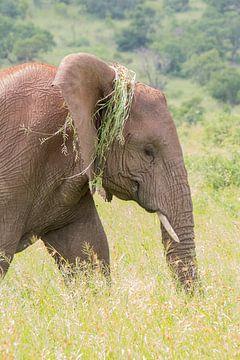 Elefant mit neuem Haarschnitt von Marijke Arends-Meiring
