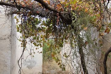 natuur overwoekerd oud huis van jan katuin