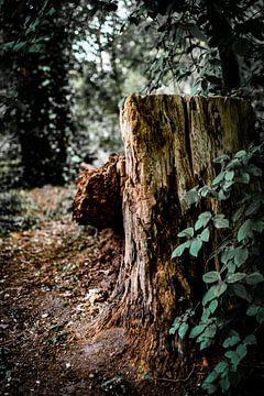 Falling tree van Bernadet van der Werf