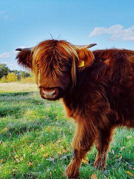 Highlander écossais sur Esther Venema