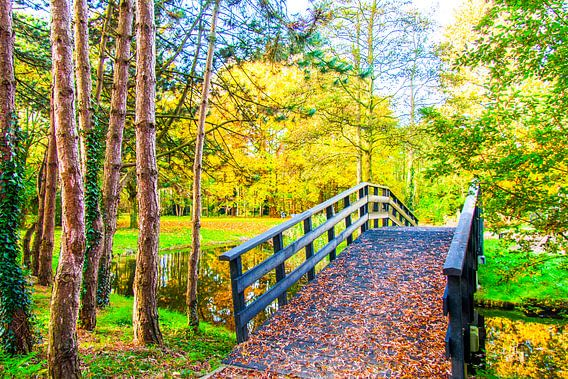 Herfstfoto in het park Buitenoord te Barendrecht.