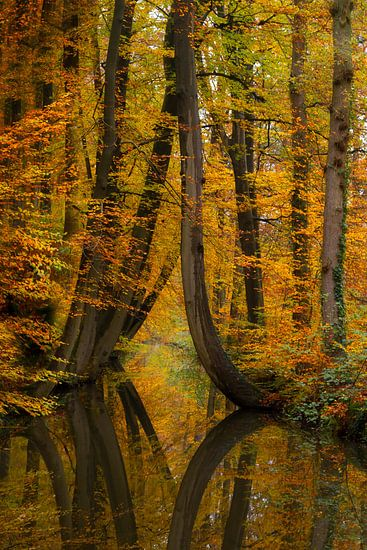 Herfst in Twickel