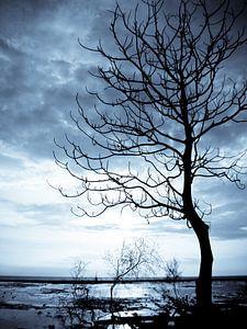 Blue tree  van