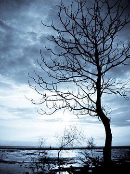 Blue tree  von Andu Alcaraz