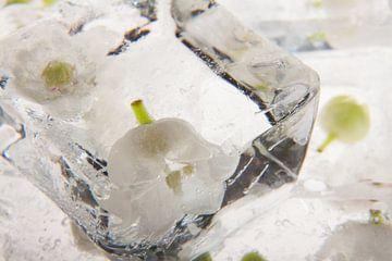 Convallaria majalis in  ice. van Marc Heiligenstein