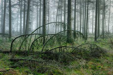 Omgevallen boom in mistig bos van Peter Bolman