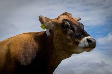 Clouse up koe - Denemarken van Melissa Zwiep