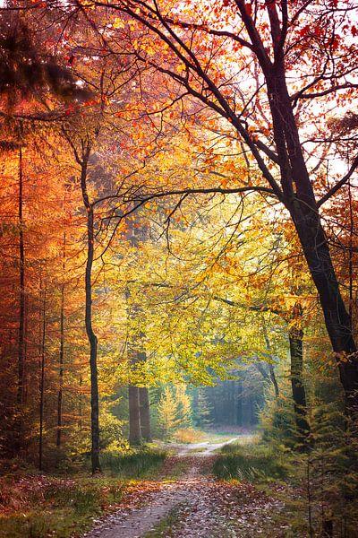Herfst kleuren in het bos. van Karel Pops