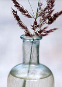 bloesem van gras in medicijnfles