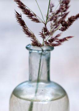 Grasblüte in Medizinflasche von Affect Fotografie