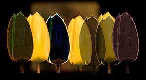 Gele en zwarte tulpen