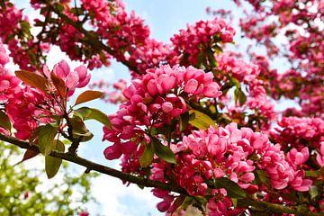 Rosa Blüte mit blauem Himmel von bart hartman