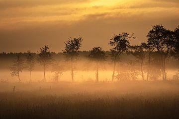 Een mistige zonsopgang op een grasakker in Nederland in het voorjaar van Anges van der Logt