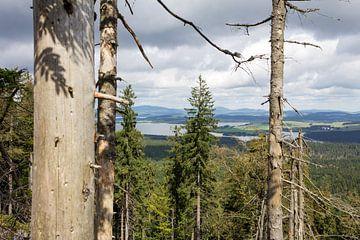Uitzicht over het Lipno meer. van Rijk van de Kaa