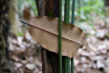 Een blad gevangen tussen de luchtwortels van een boom. van rene marcel originals