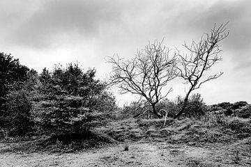 Kale boom naast een volle boom in de duinen van MICHEL WETTSTEIN