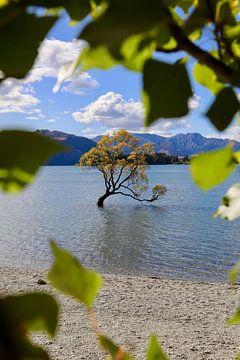 Cet arbre Wanaka - Nouvelle-Zélande sur Be More Outdoor