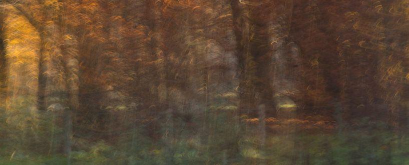 Herfstbos burst van Chantal van Dooren