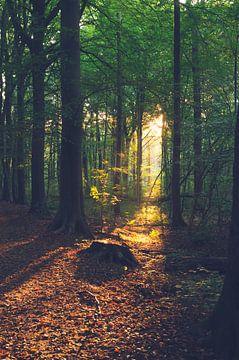 Licht im Wald von Davy Vernaillen