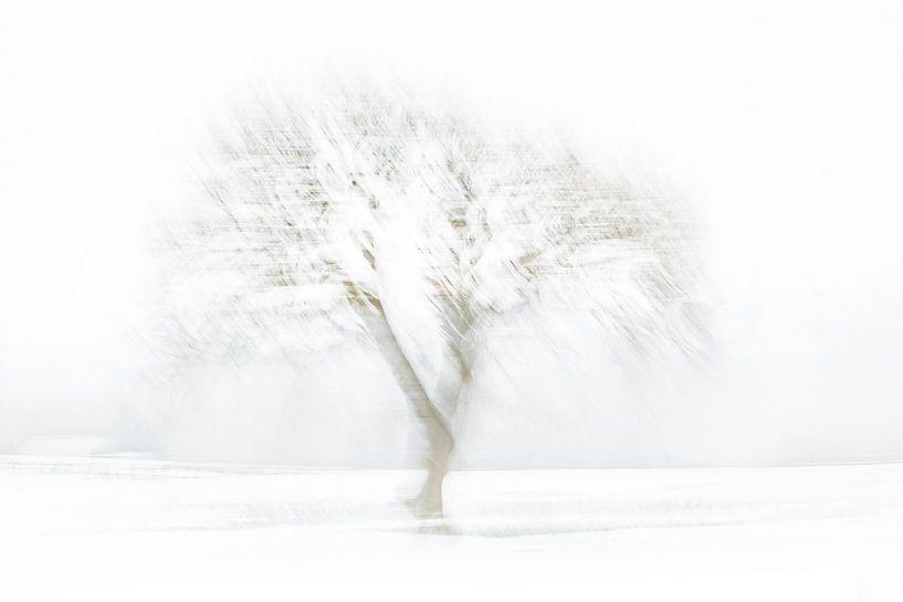 Winterse Boom van Vandain Fotografie