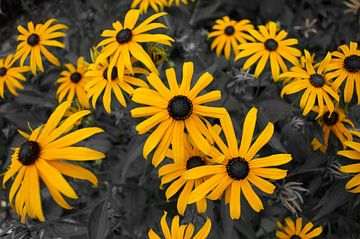 Gelben Blüten von Roy Kosmeijer