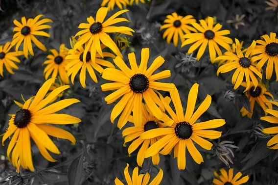 Gele bloemen van Roy Kosmeijer