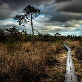 De Weg van Edward Sarkisian