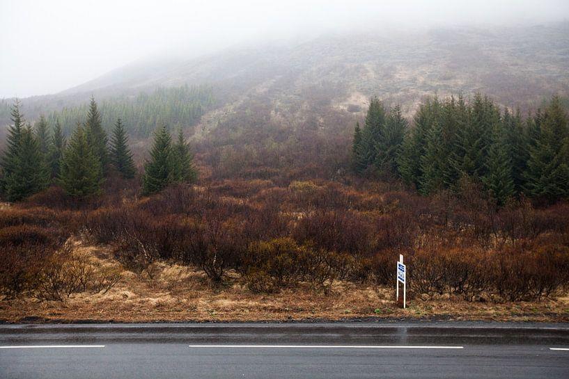 Ijslands bos van W Machiels