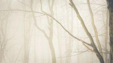 Schaduwen van de bomen in het sprookjesbos van Tobias Luxberg