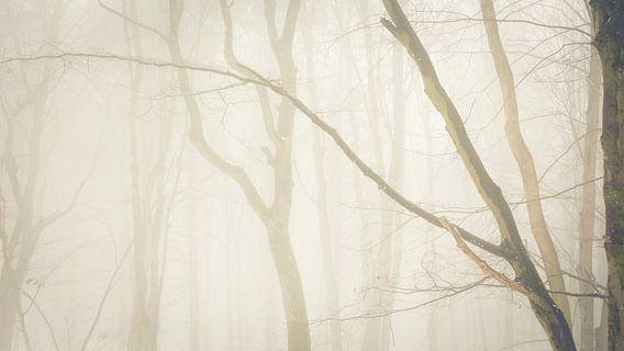 bos en mist van Tobias Luxberg