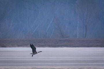 Vogel bij het ijzige meer van Tobias Luxberg