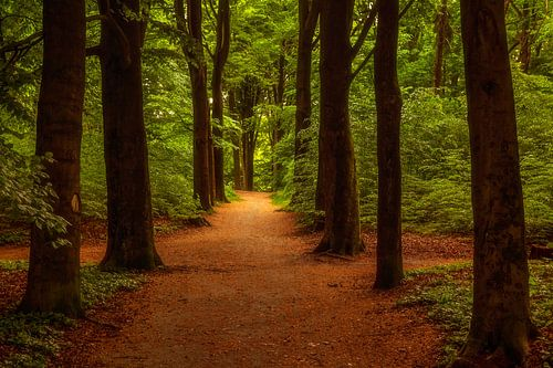 Een wandeling door het park