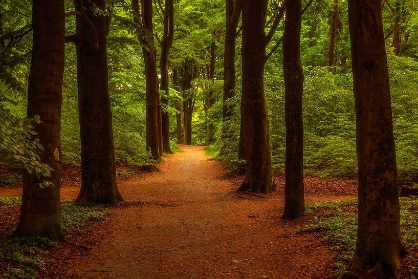 Een wandeling door het park van Tim Abeln