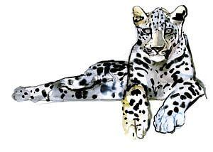 Arabischer Leopard