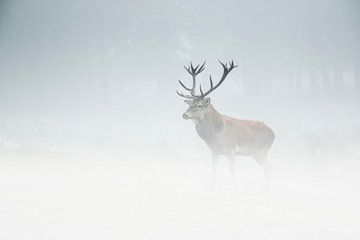 edelhert in de mist sur
