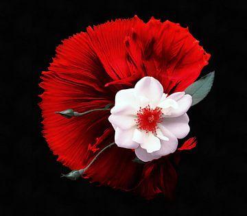 Rose sauvage sur Jacky Gerritsen