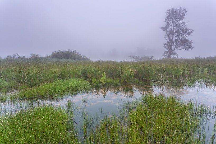 Mist in de  Biesbosch. van Adrian Visser