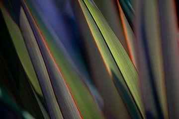 Abstract kleurrijk gras in de natuur van Hiske Boon